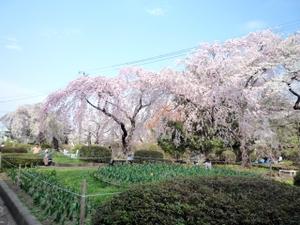 Mizusawakouen01