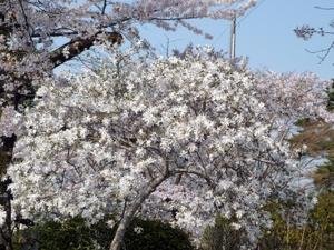Mizusawakouen03
