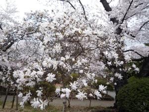 Mizusawa103