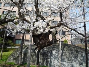 Ishiwari104